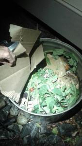 Composting Worms NWCCI